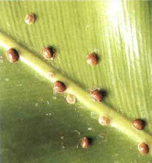 Що треба знати про шкідників кімнатних рослин