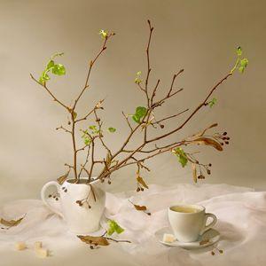 Як заварювати липовий чай