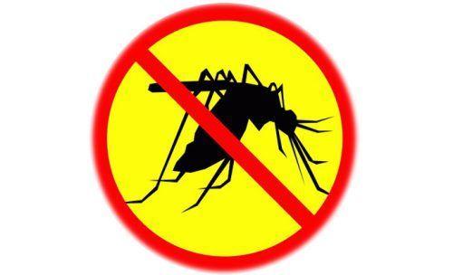 Яку можна зробити пастку для комарів своїми руками