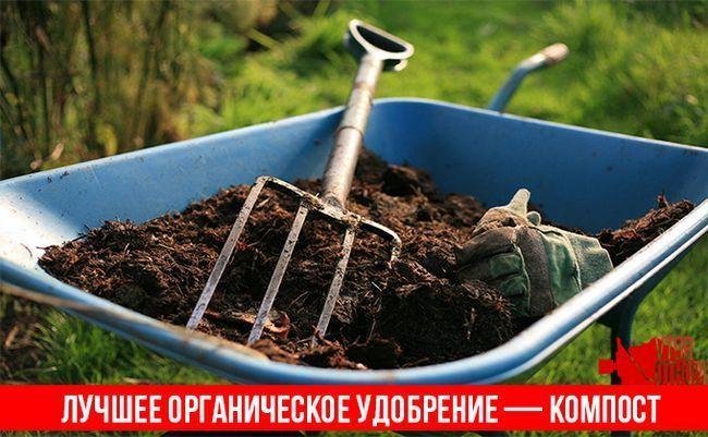 Переробка в компост