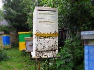 Бджільництво Фінляндії