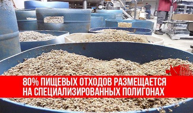 Відходи у виробництві корми
